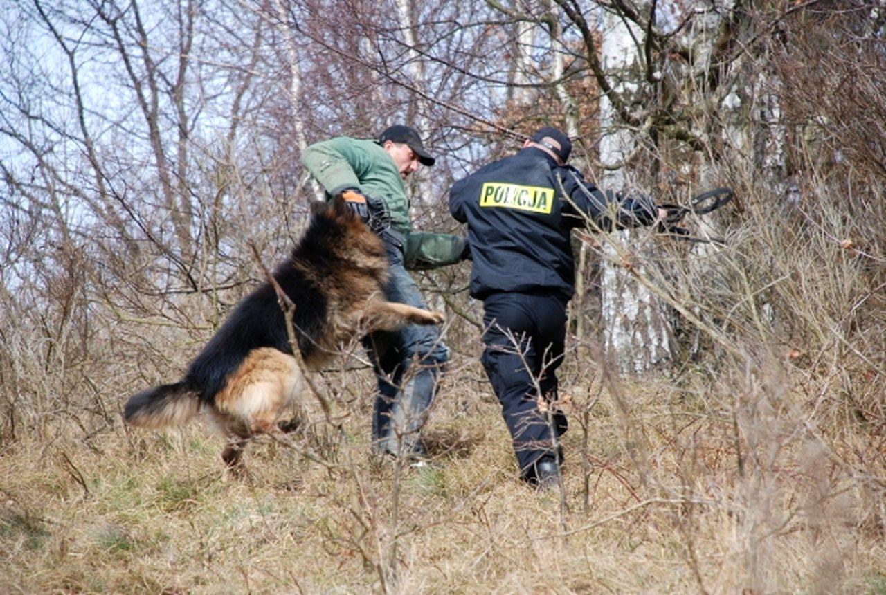 Puck: święto policyjnych psów. W KPP Puck służą: Hans, Kama i Denar | ZDJĘCIA