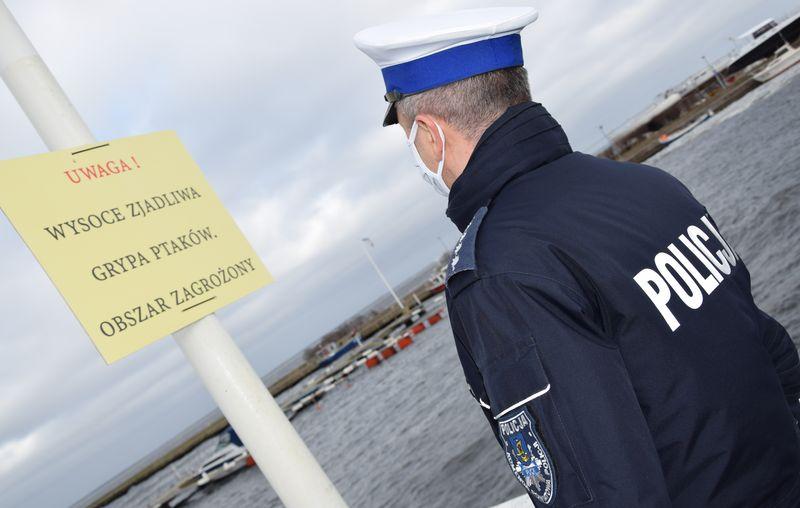 Policja i lekarz apelują: nie zbliżaj się do łabędzi na Zatoce Puckiej