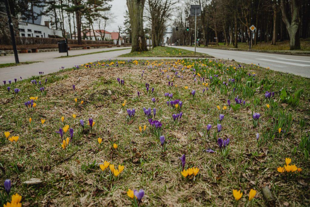 wiosna władysławowo 2021