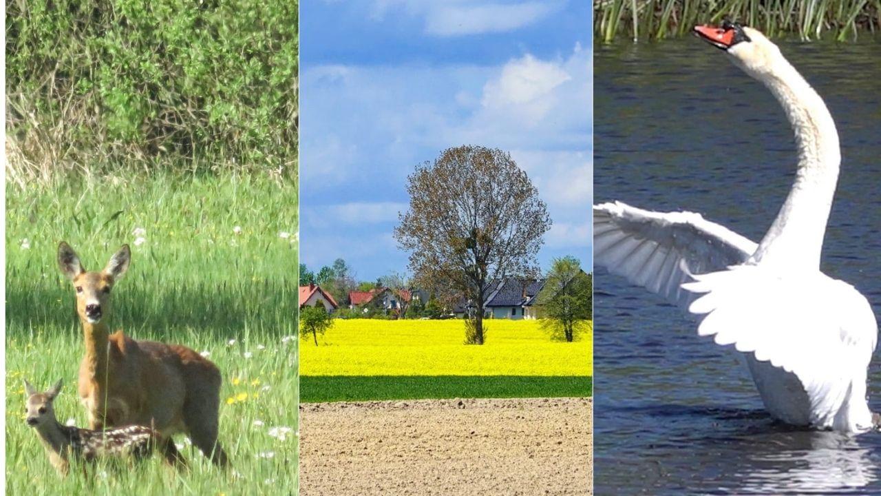Dzika przyroda w Pucku i okolicach. Maj 2021 wokół nas rozkwita życiem | FOTO POWIAT PUCKI