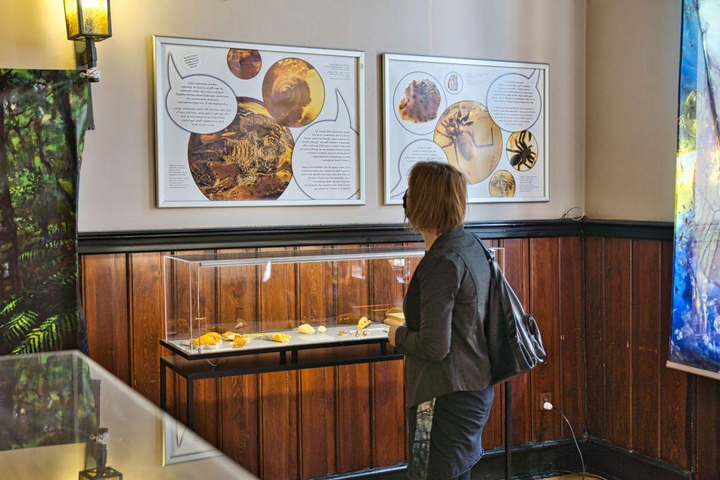 puck bursztyn wystawa (1)