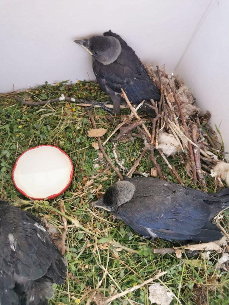 osp władysławowo uratowali ptaki
