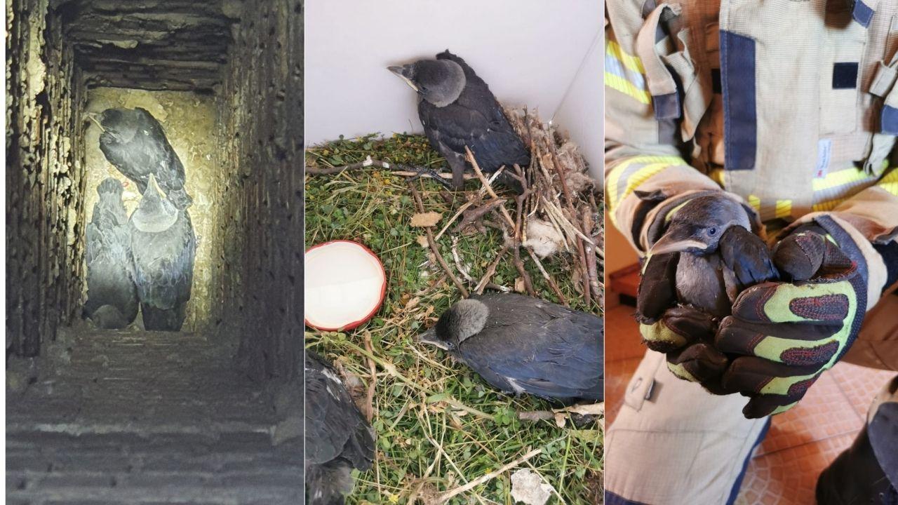 Władysławowo: strażacy uratowali ptaki, które utknęły w kominie | ZDJĘCIA
